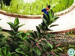 """中心水体不仅将整个庭院变得灵巧,更增加了各景观元素的""""向心力""""和亲切感"""