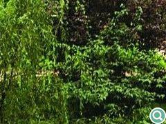 从居民楼对中庭的小角度鸟瞰,各种石景元素掩映在葱苍绿化中,相得益彰