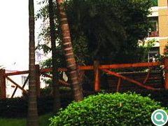高大的棕榈乔木与灌木及地被形成的独特围合空间